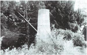 徳山の歴史の証人クロガネモチ